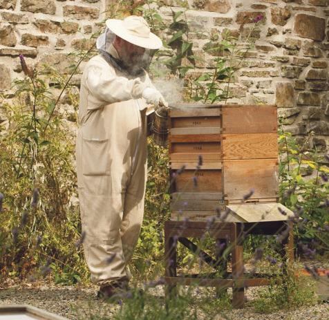 pembs beekeeping
