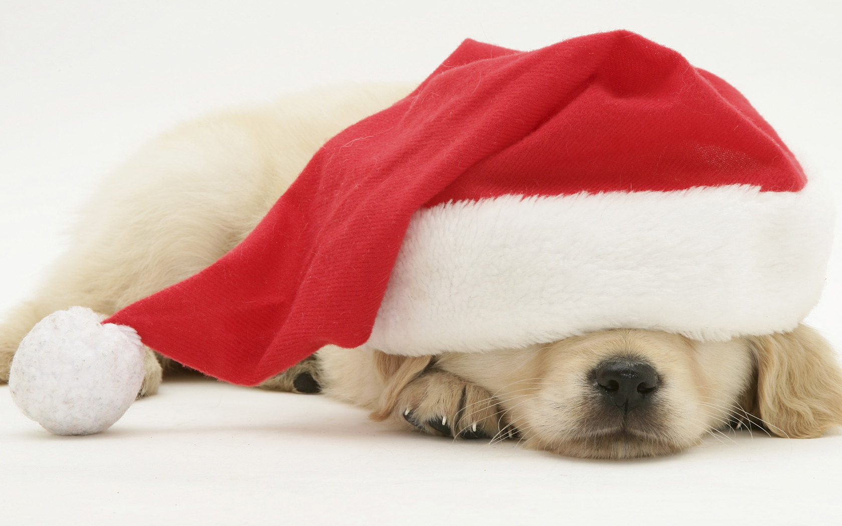 Cute Christmas Puppies Background Wallpaper