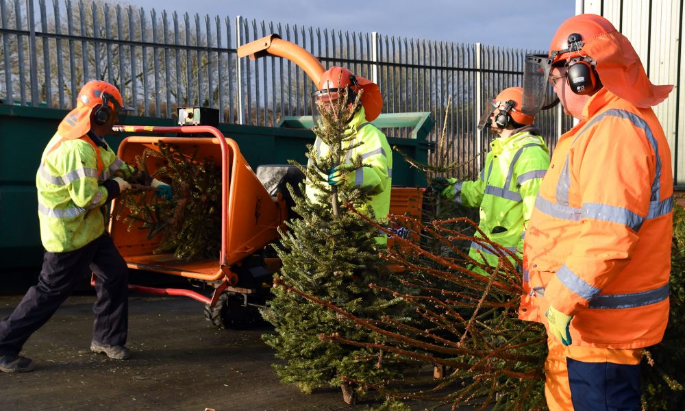council backs free tree collection the pembrokeshire herald