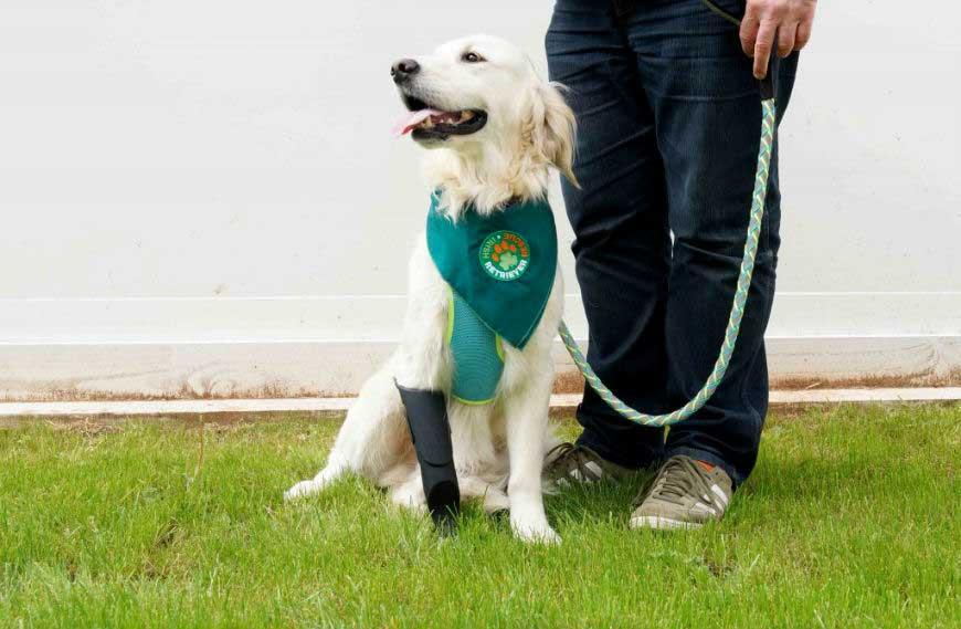 Dog Rescue Pembrokeshire