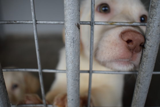 Shocking Puppy Farm Scandal Exposed The Pembrokeshire Herald